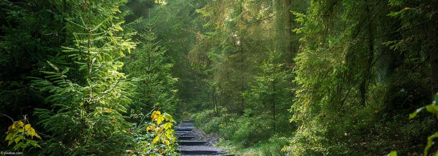 Weg im Wald mit unebenen Stufen